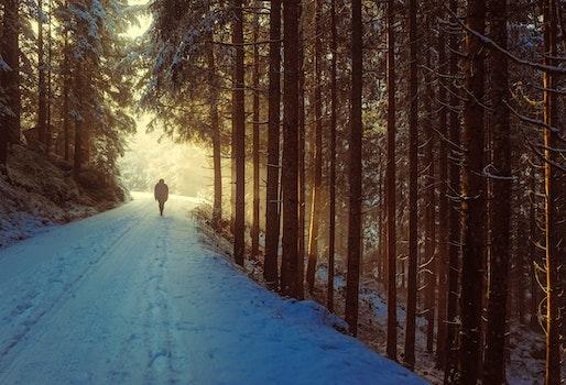 Free stock photo of snow, road, dawn, landscape