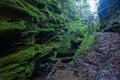 森林, 石頭 的 免費圖庫相片