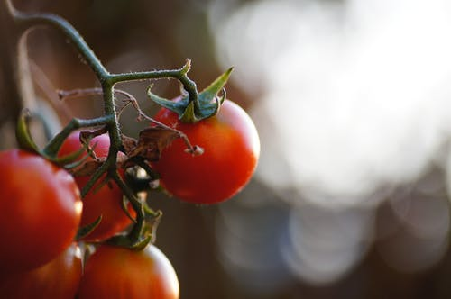 Close-Up Photo of Red Tomatoes