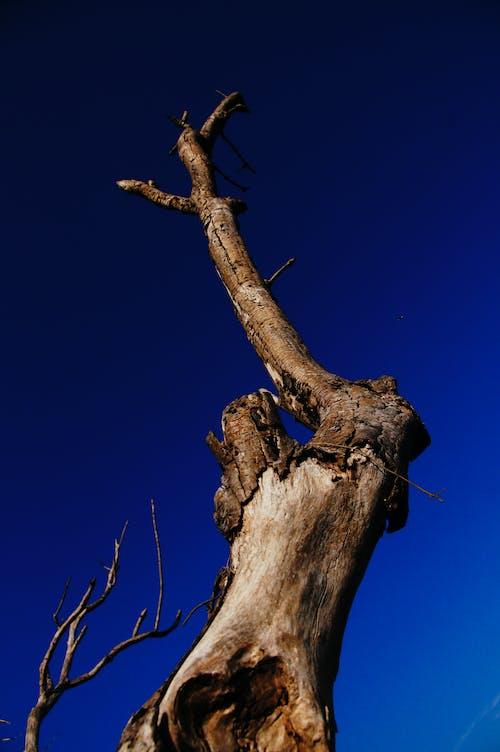 Fotos de stock gratuitas de árbol desnudo, bañador, foto de ángulo bajo, fotografía de ángulo bajo