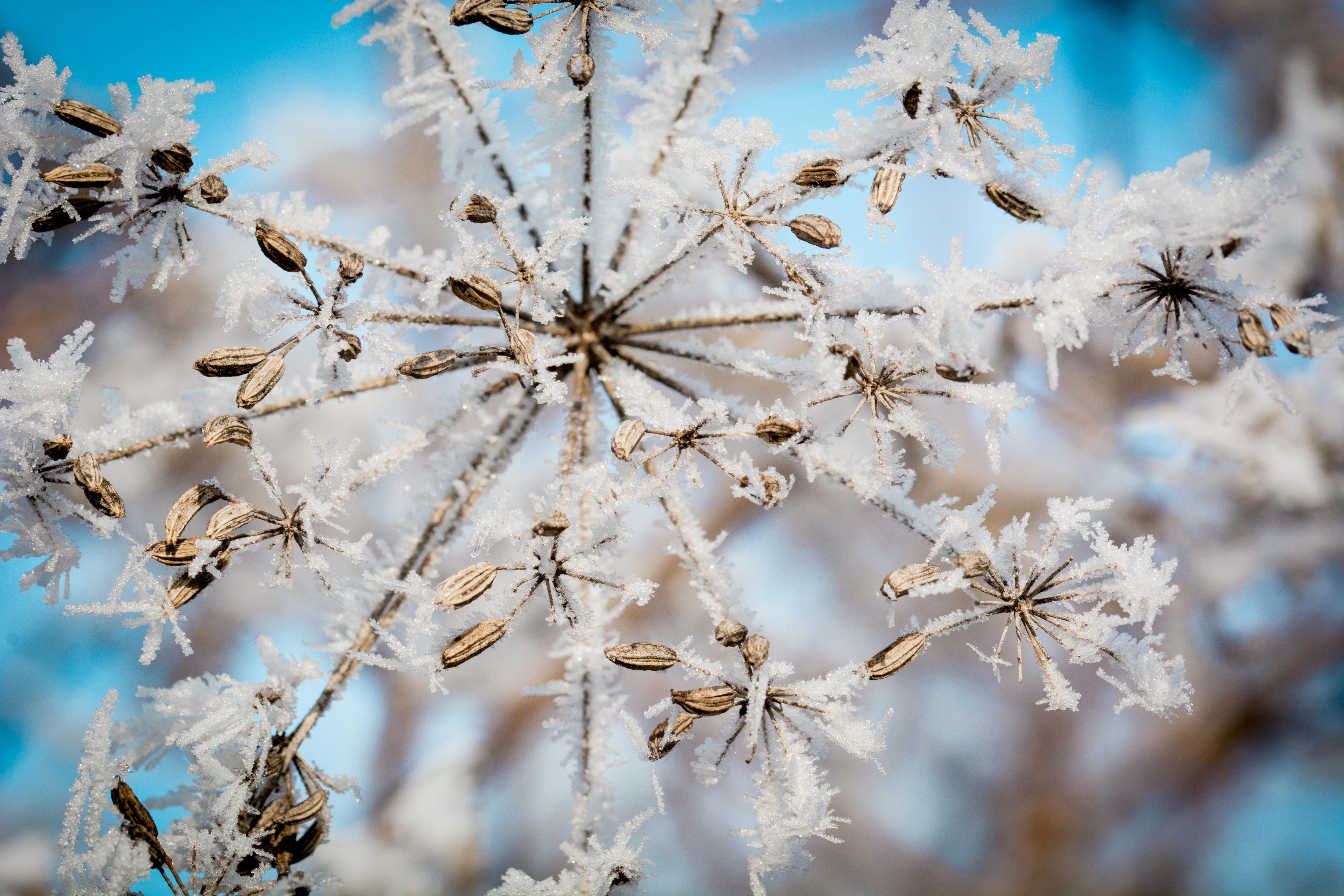 closeup photography of snowflake 183 free stock photo