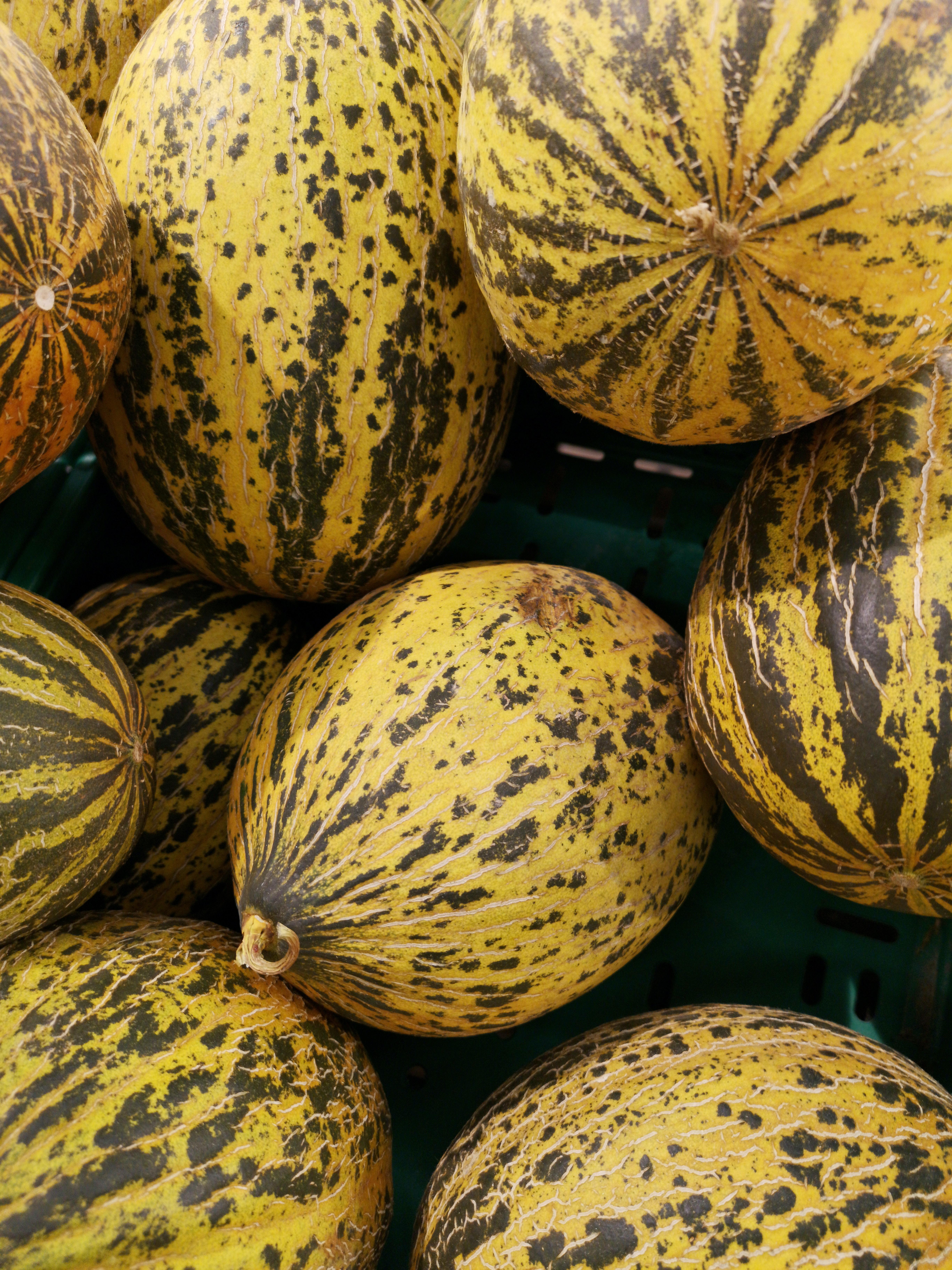 Round Yellow Fruits · Free Stock Photo