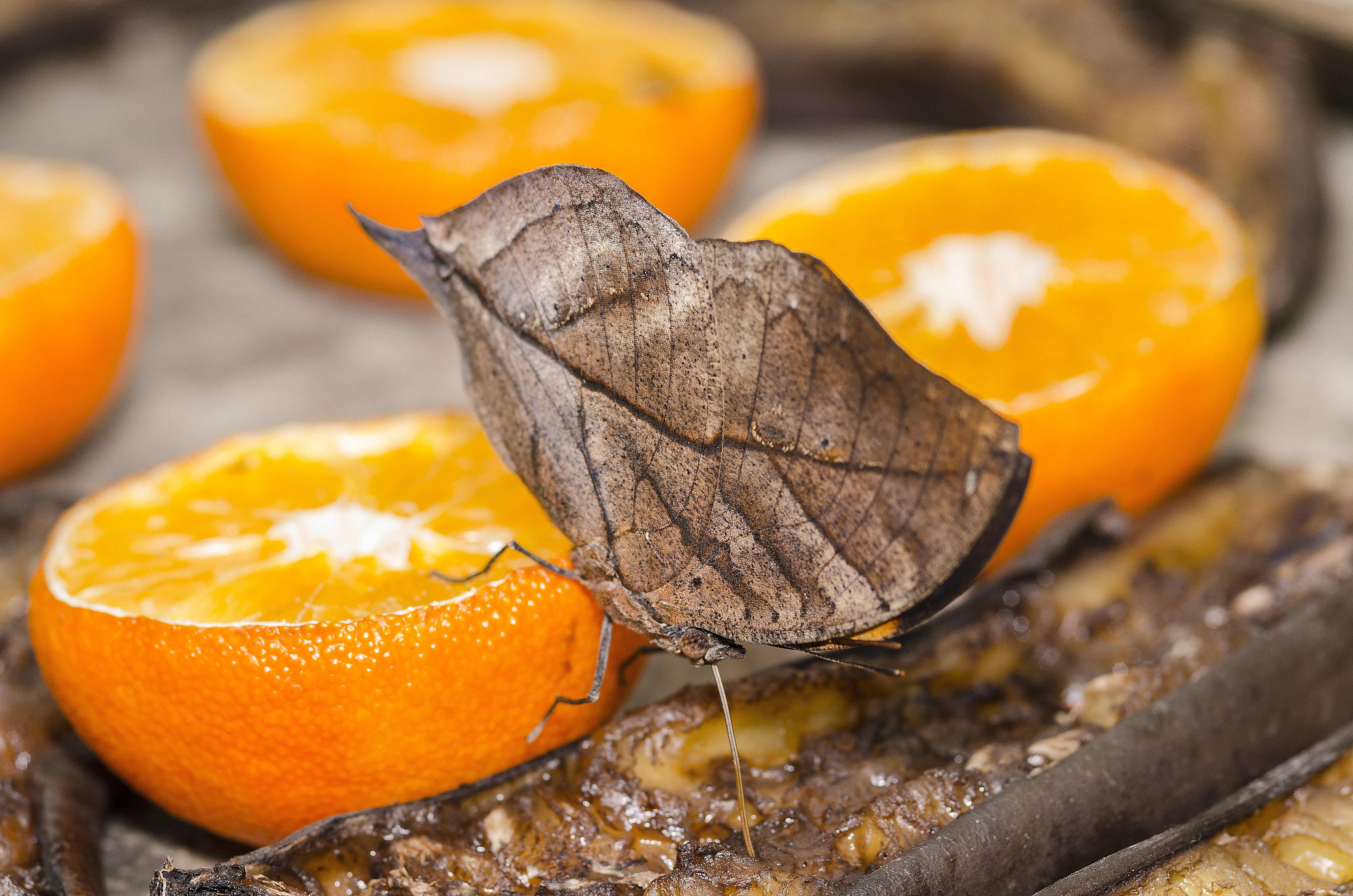 Free stock photo of nature, eating, orange, insect