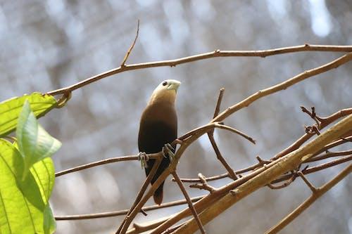 Fotobanka sbezplatnými fotkami na tému divočina, príroda, vták, whitehead munia