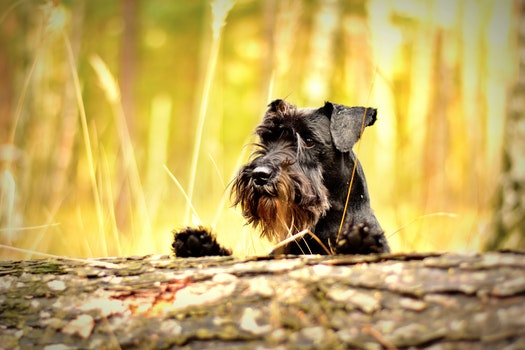 Free stock photo of wood, summer, animal, dog