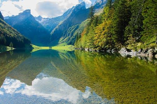 Kostenloses Stock Foto zu baum, bäume, berg, berge