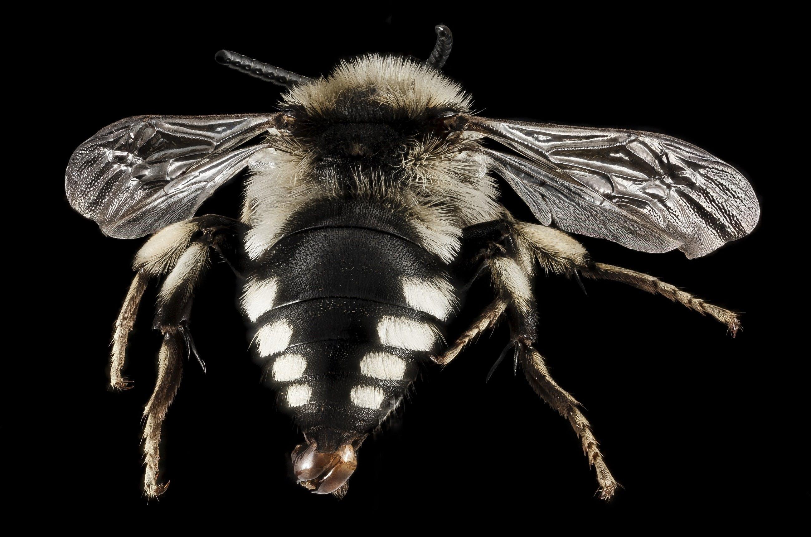 Free stock photo of nature, bee, pollen, portrait