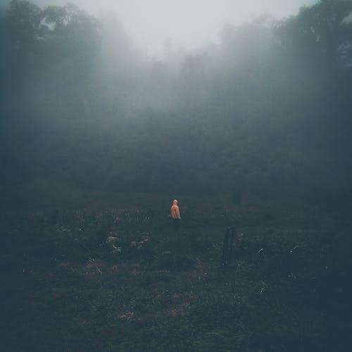 Ảnh lưu trữ miễn phí về áo hoodie, bình minh, buổi sáng sương mù, cây