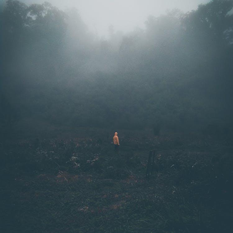 бродять, дерева, дим