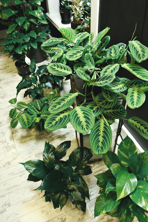 Photo of Potted Houseplants