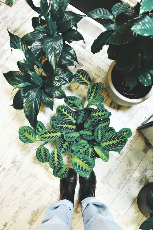 人, 圖案, 室內, 室內植物 的 免费素材照片
