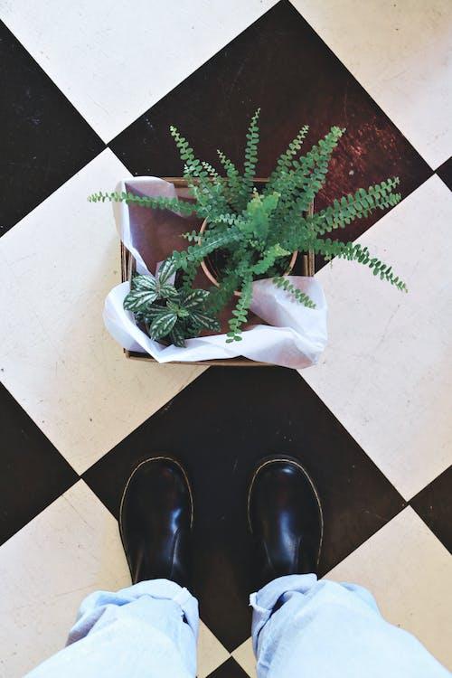 cemar, dalam ruangan, daun pakis