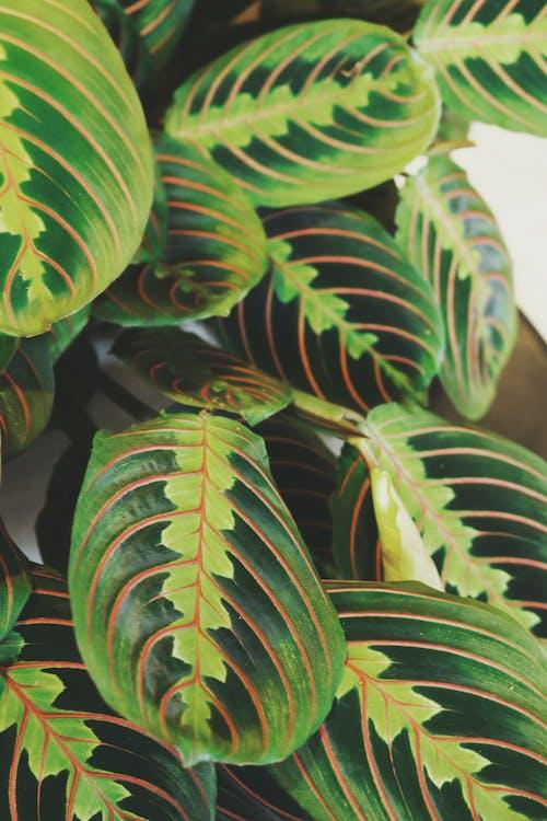 Foto stok gratis Daun-daun, daun-daun hijau, pola, warna