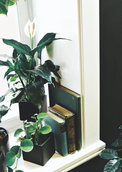 Бесплатное стоковое фото с в помещении, декор, дом, заводы
