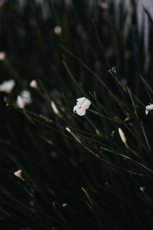 alan derinliği, Beyaz çiçek, bitki örtüsü, bulanıklık içeren Ücretsiz stok fotoğraf