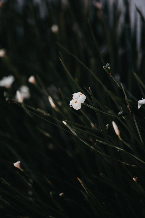 белый цветок, глубина резкости, лист