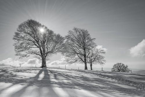 Foto stok gratis alam, awan, bayangan, beku