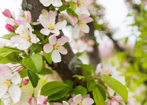 Imagine de stoc gratuită din arbore, bokeh, contrast, floare