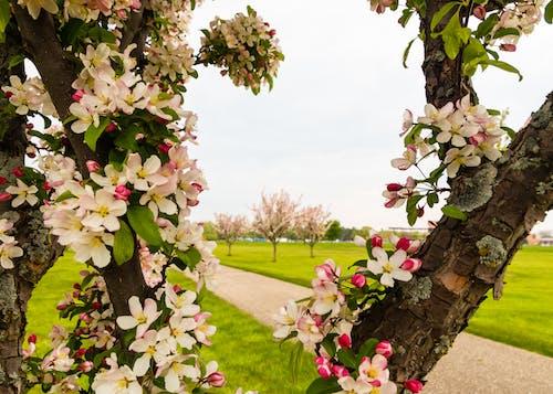 Photos gratuites de arbre, brillant, contraste, fleur