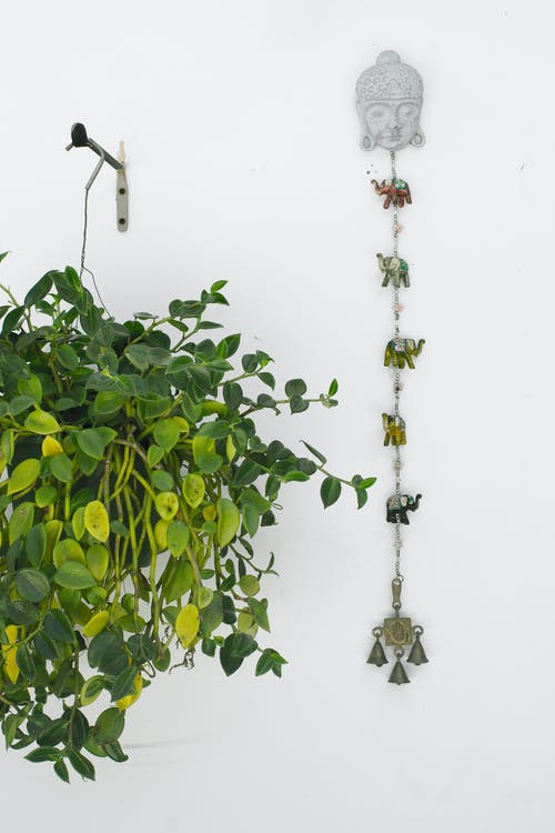 asılı, asılı bitki, Beyaz arka plan, Beyaz duvar içeren Ücretsiz stok fotoğraf