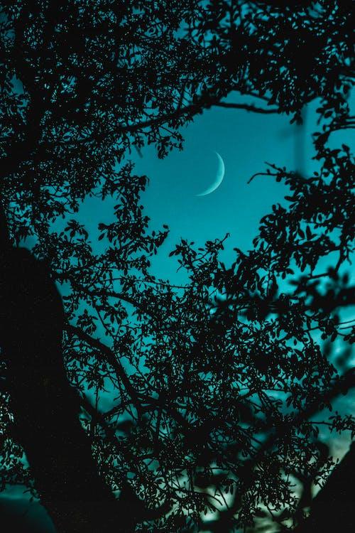 albastru, arbori, copaci