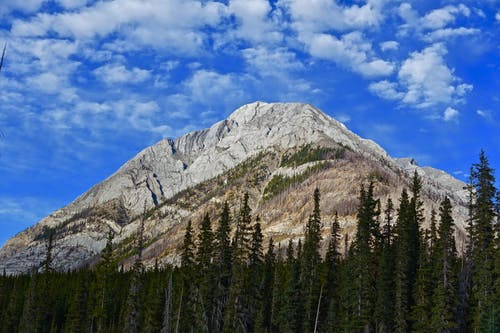 Kostnadsfri bild av barrträd, berg, bergstopp, dagsljus