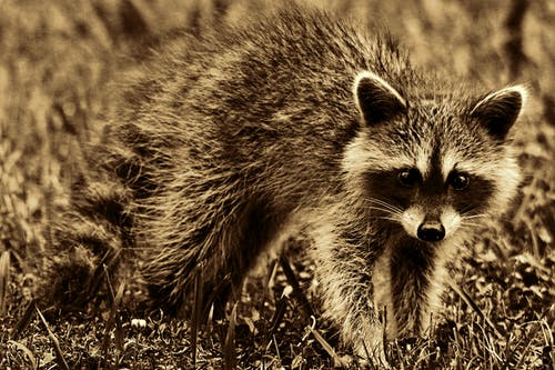 Ảnh lưu trữ miễn phí về cận cảnh, cỏ, con vật, dễ thương