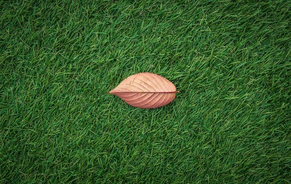 autumn, dried leaf, field
