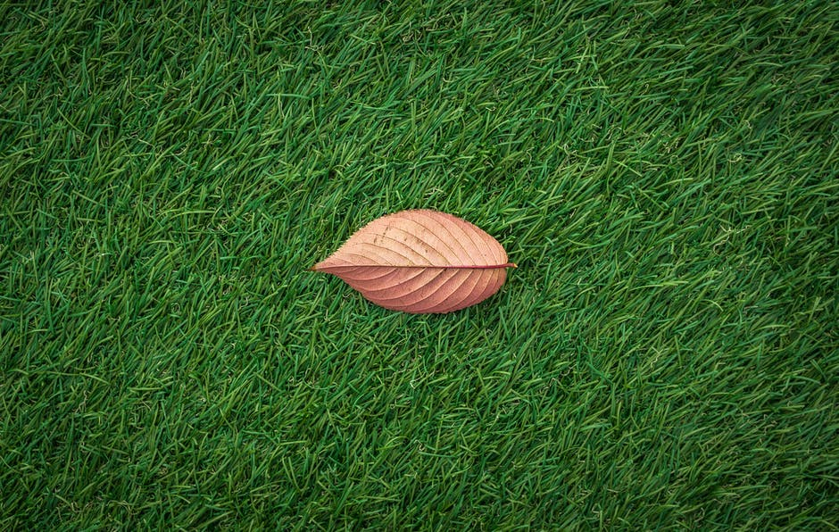 New free stock photo of field, garden, grass