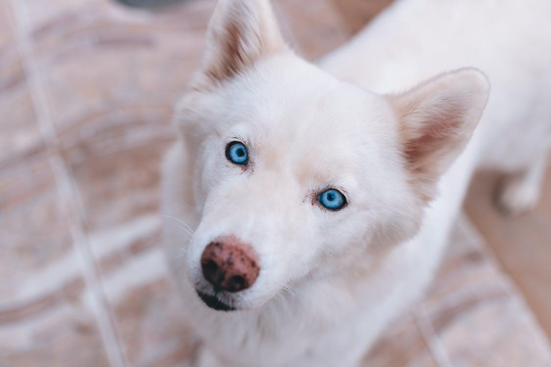 Hochwinkelfoto Eines Hundes