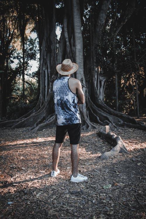 คลังภาพถ่ายฟรี ของ ความงามในธรรมชาติ, ชายป่า, ธรรมชาติ, ราชาแห่งป่า