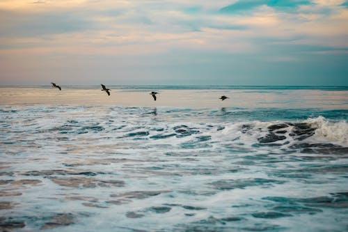 Δωρεάν στοκ φωτογραφιών με γνέφω, θάλασσα, ουρανός, παραλία