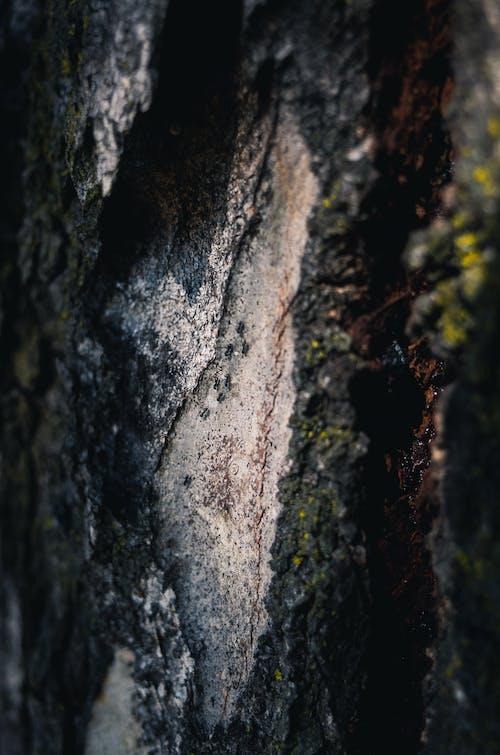 Darmowe zdjęcie z galerii z abstrakcyjny, drzewo, kora, makro