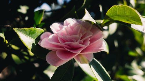 Darmowe zdjęcie z galerii z kwiat, kwiatowy, kwitnąć, liść
