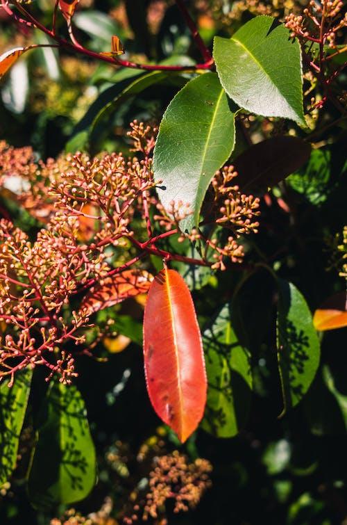 Darmowe zdjęcie z galerii z dzień, liść, liście, na zewnątrz