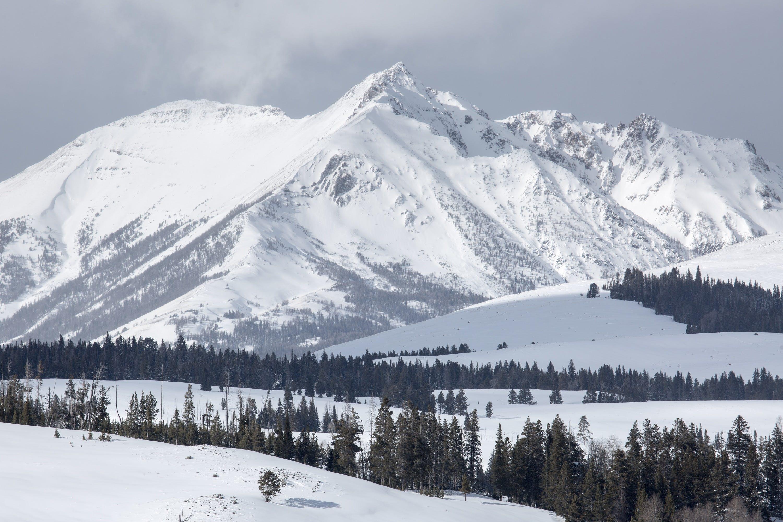 alpine, cold, conifer