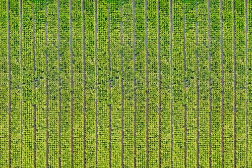 공중, 낮, 논, 농경지의 무료 스톡 사진