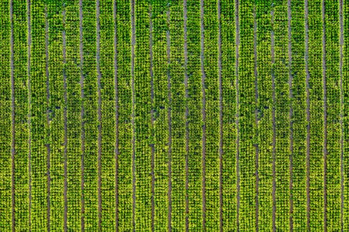 Kostnadsfri bild av åkermark, antenn, dagtid, drönarbilder