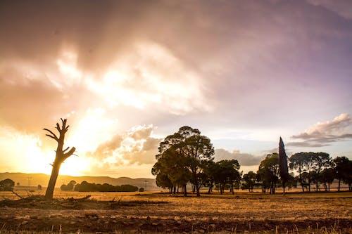 Free stock photo of ain tindamine, ali meddah, aperture, Beautiful sunset