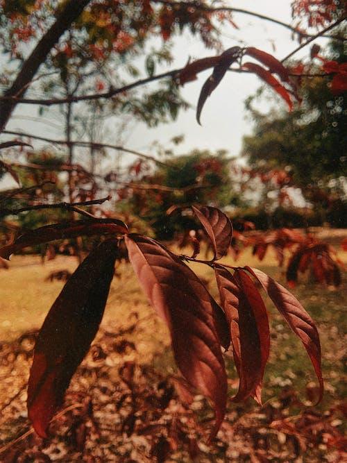 Kostenloses Stock Foto zu bäume, blätter, details, gold-gelb