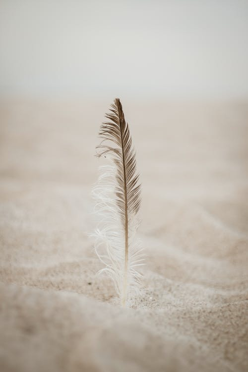 Close-Up Photo of Brown Feather on Sand
