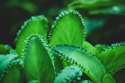 Photos gratuites de environnement, feuilles vertes, flore, fond de nature
