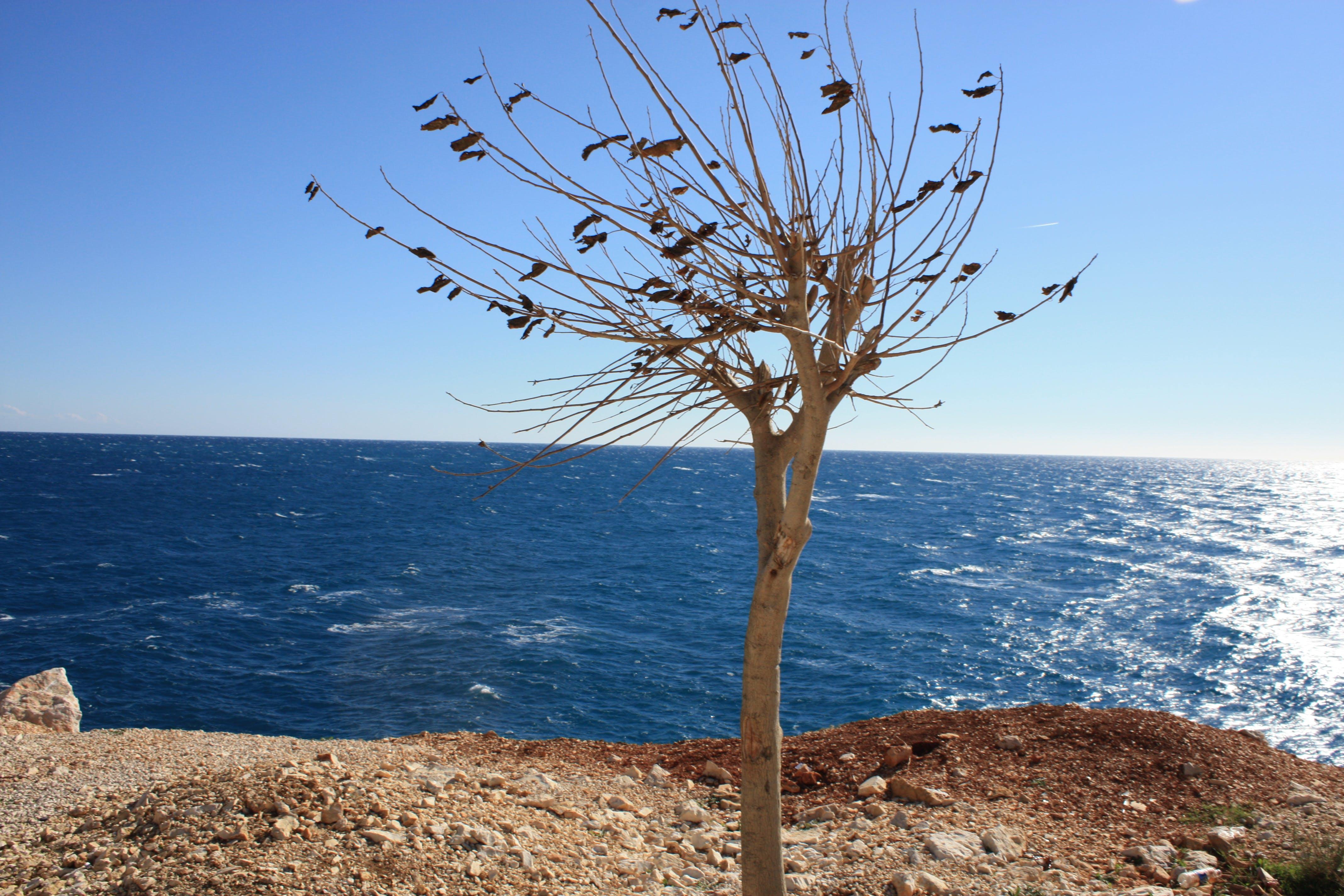 Free stock photo of finike, sea, sea view, tree