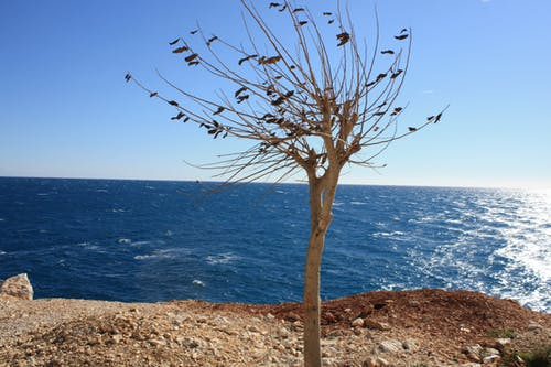 Foto profissional grátis de árvore, finja, mar, peru