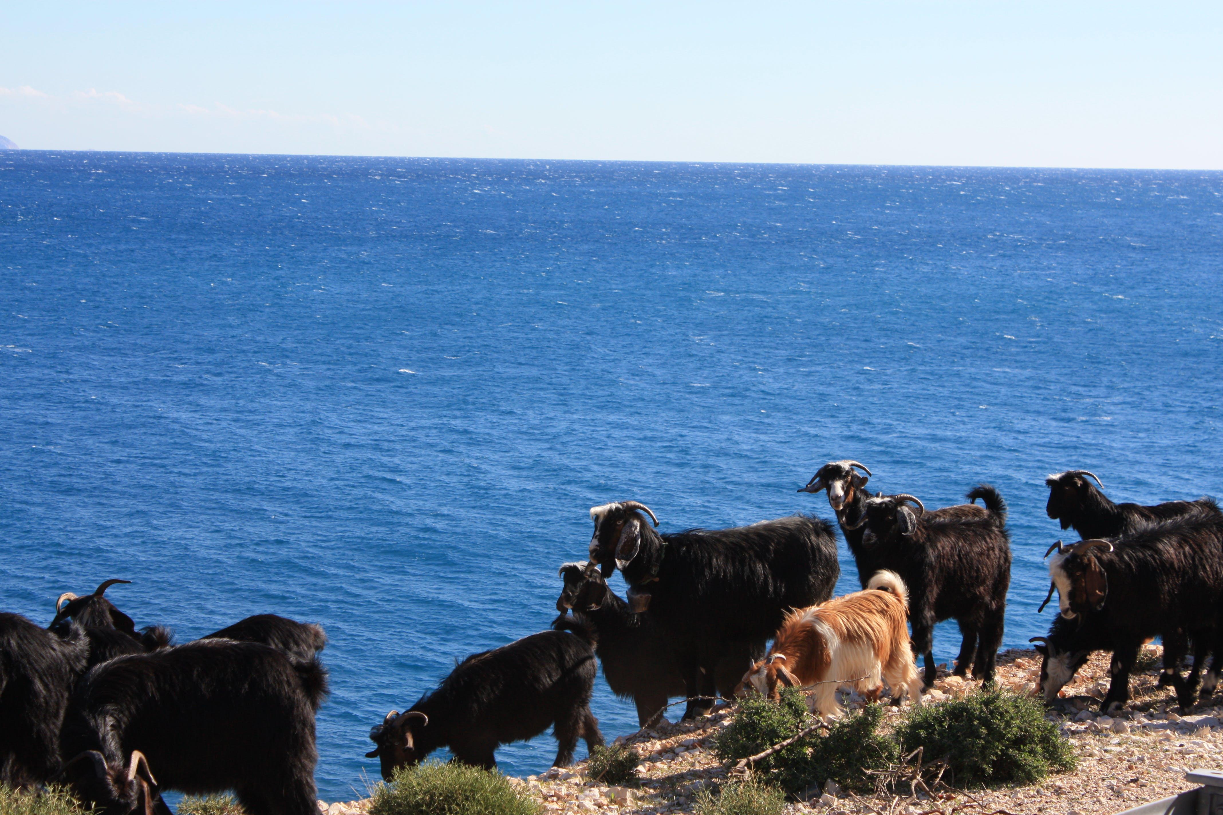Základová fotografie zdarma na téma finike, kozy, krocan, moře