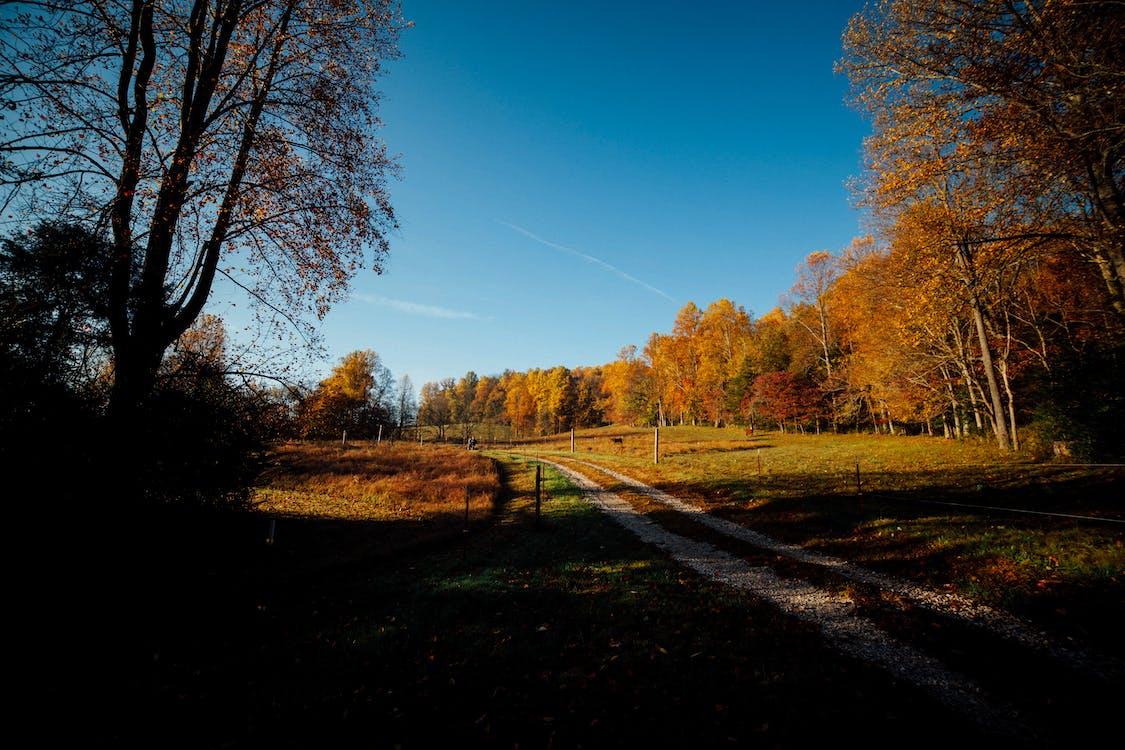 arbres, automne, campagne
