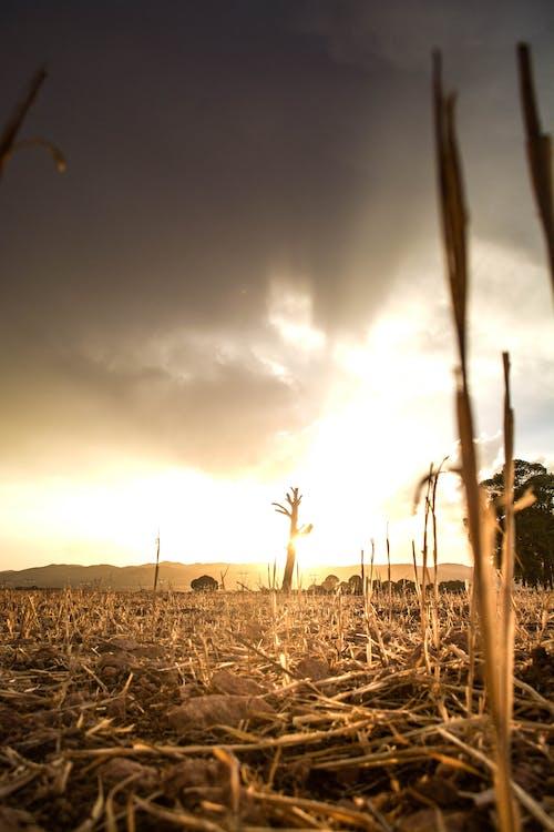 Free stock photo of ain tindamine, ali meddah, Beautiful sunset, clouds