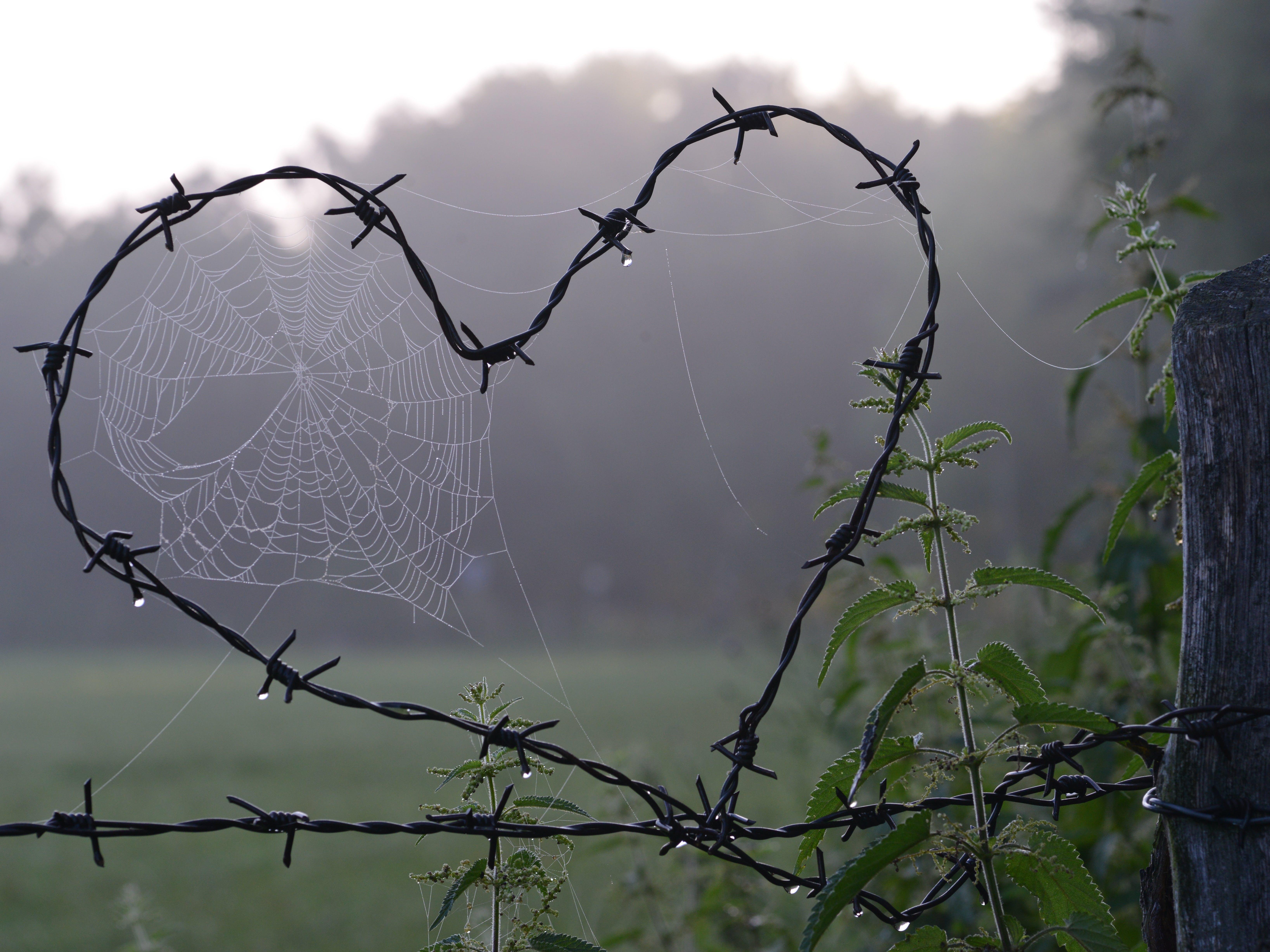 Free stock photo of love, heart, cobweb