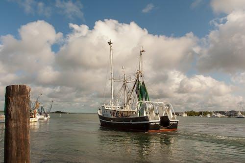 agbiopix, 水, 水產養殖, 海岸 的 免費圖庫相片
