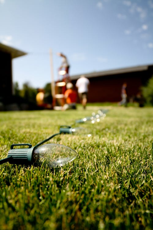 Close-Up Photo of String Lights on Grass Field